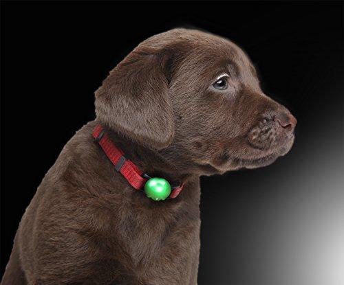 PRECORN LED Leuchtanhänger Silikon Leuchthalsband Led Hundehalsband in grün