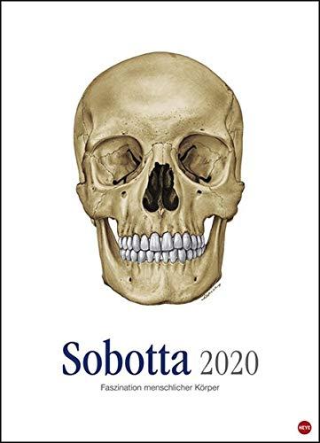 Sobotta Faszination menschlicher Körper Edition 2020 49x68cm - Anatomie Kalender