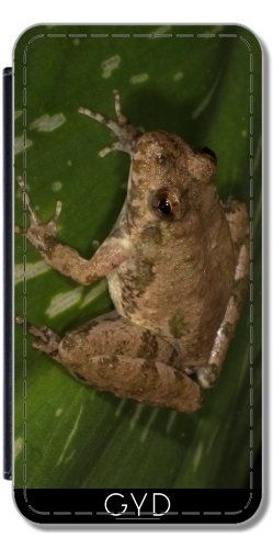 Leder Flip Case Tasche Hülle für Apple Iphone 7 Plus / 8 Plus - Cricket-Frosch by loki1982 Lederoptik