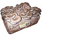Idea Regalo - 4 pezzi kit coltivazione funghi pleurotus cardoncello substrato panetti funghi,casa giardino