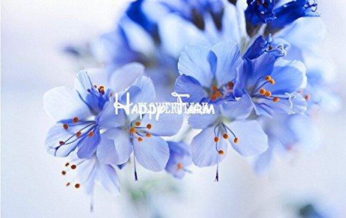 20seeds cerise graines de fleurs Mix bleu rose rouge couleurs blanc sakura graines de fleurs sementes de flores plantes pour les petits jardins