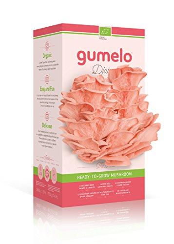 Gumelo - Orgánico crece tu propio kit -...