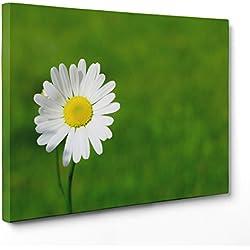 ConKrea Cuadro Sobre Lienzo Listo para Colgar–Flores–Margaritas Blancas de Colores–Naturaleza Panorama Paisaje–Campo Florido Ramo