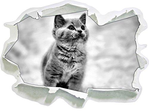 Monocrome, Niedliches Katzenbaby auf Teppich Papier im 3D-Look, Wand- oder Türaufkleber Format: 92x62cm, Wandsticker, Wandtattoo, Wanddekoration