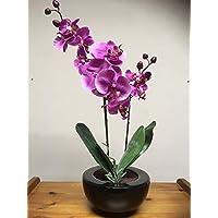 Amazon Es Orquideas Negras Flores Plantas Y Flores Artificiales