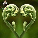 Vista Tohum Essbare Farn Gemüsesamen Seltene Liebe Farn Samen Reben Kletterpflanzen Für Hausgarten Zierpflanze Semillas 100 Teile/Beutel