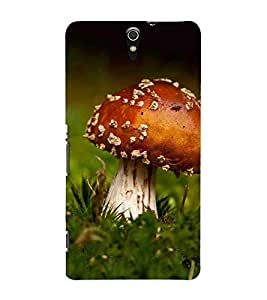 MUSHROOM, Brown, MUSHROOM Patterns, Beautiful Pattern, Printed Designer Back Case Cover for Sony Xperia C5 Ultra Dual :: Sony Xperia C5 E5533 E5563