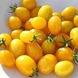 SeeKay Tomato 'Ildi' - Yellow 120 seeds