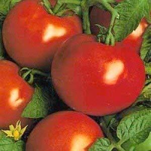 Seekay Tomate' St.Pierre '30 Graines Française - Tardif Culture