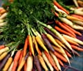 Viridis Hortus - Carrot Rainbow Blend 400 (0.6g) Vegetable Seeds