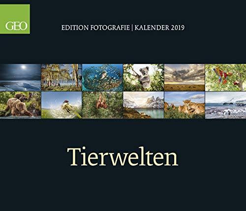 Tierwelten - Kalender 2019 - teNeues-Verlag - GEO - Wandkalender mit faszinierenden Tierfotgrafien - 70 cm x 60 cm