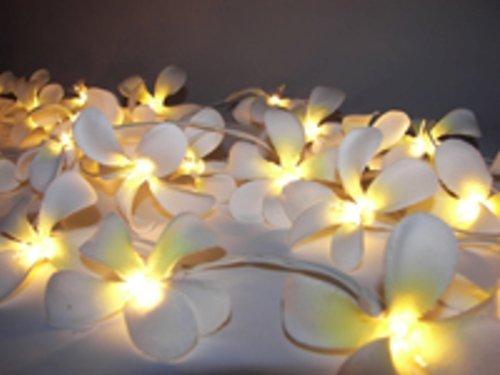 tokodirect-20er-led-frangipani-blume-lichterkette-innen-warmweiss-batteriebetrieben-lichterkette-wei