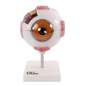 66fit Riesenmodell eines Auges – Weiß