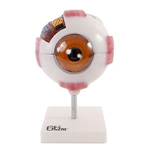 66fit Riesenmodell eines Auges - Weiß