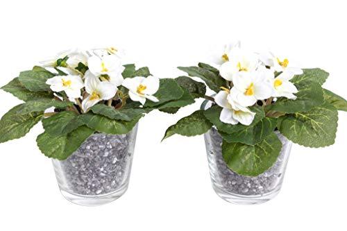 Flora-Seta GmbH künstliches Blumen-Arrangement im Glas (2 Stück) (Creme-Weiß, Usambaraveilchen)