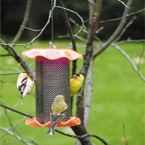 Birds Choice 1Qt. Forever Nigersamen Farbe Orange - Forever Feeder