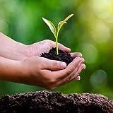 SAPRETAILER Enriched Vermicompost Manure Fertilizer Complete Plant Food 20Kg