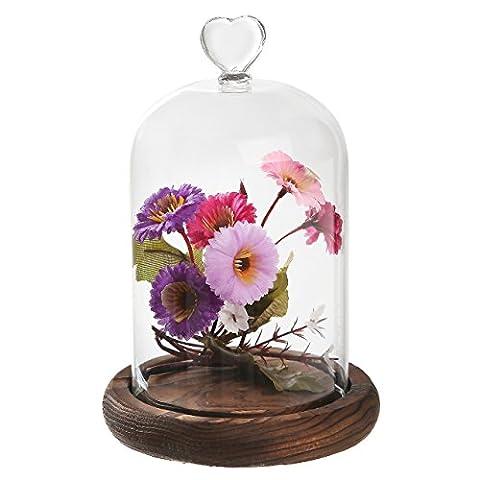 mygift 17,8cm Mini bois et cloche en verre transparent cloche Table/plateau d'affichage Case w/cœur/Poignée