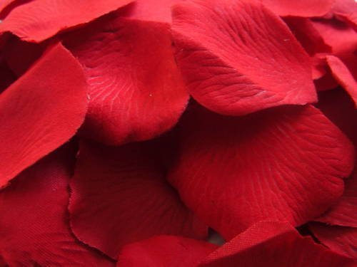 200 lightly scented quality red silk rose petals not pressed petals amazoncouk kitchen u0026 home