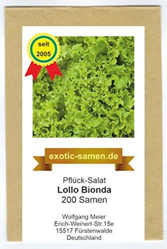 Pflück-Salat - Lollo Bionda (200 Samen)