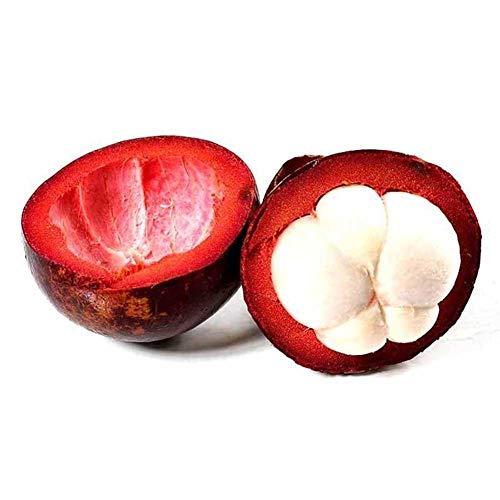 Shoppy Star Shoppy étoiles: SimingD - Graines mangoustan mangoustan Jardin Plantes en pot Plantes vivaces 10 PiÚces / 1 sachet