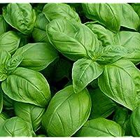 PlenTree 1000 Basil- Genovese Seeds polinización abierta-no gmo