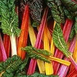 SeeKay Swiss Chard 'Rainbow' 150 seeds 'Beat Leaf'