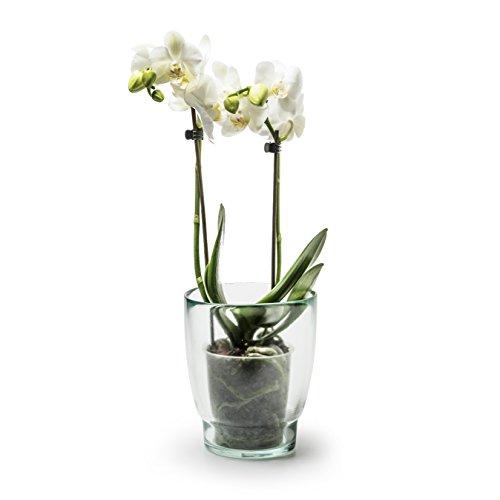 Jodeco Orchideenglas aus Recycling Glas Eco Orchideentopf 15cm Blumentopf nachhaltig transparent