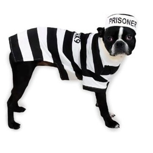 Artikelbild: Casual Canine Prison Pooch Costume, X-Small by Casual Canine