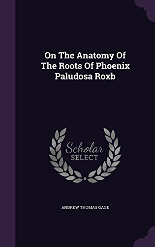 On The Anatomy Of The Roots Of Phoenix Paludosa Roxb