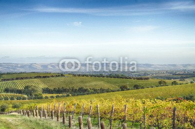 alu-dibond-bild-140-x-90-cm-mclaren-vale-vineyard-and-horizon-in-the-afternoon-bild-auf-alu-dibond