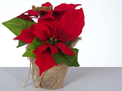 Bambelaa! Bambelaa! 3 StückWeihnachtsstern künstlich Fenster naturgetreu Weihnachten Dekoration Weihnachtsdeko