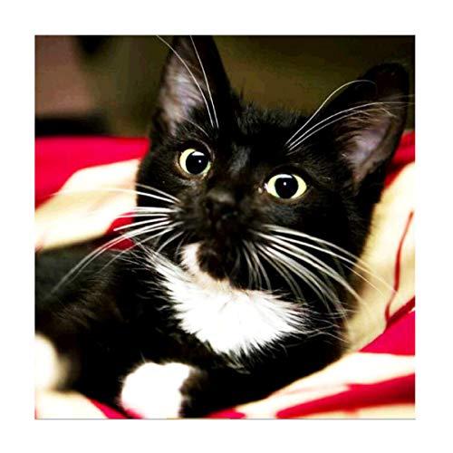 MXJSUA 5D DIY Diamant Malerei von Nummer Kit Fulll Runde Dril Perlen Kristall Strass Stickerei Kreuzstich Bild liefert Kunst Handwerk Wandaufkleber Dekor Black Cat 12x12In (Marvel Black Hot Cat)