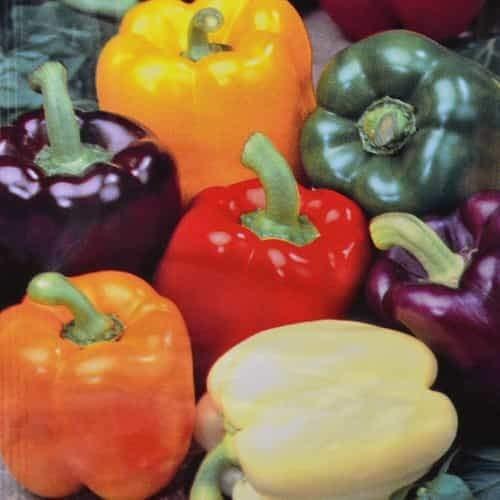 Tomasa Samenhaus- Paprika Farbenmischung Chilischoten Saat Garten Gemüse Pflanzen Gesunde Nahrhafte Paprika Samen