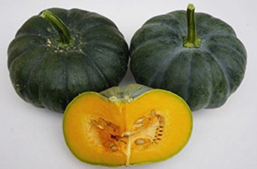 Seedstores : Hybrid Pumpkin KRISHNA F1 Dark Green High Yield Seeds for Terrace Kitchen Balcony Poly House Gardening 12 Seeds  available at amazon for Rs.145