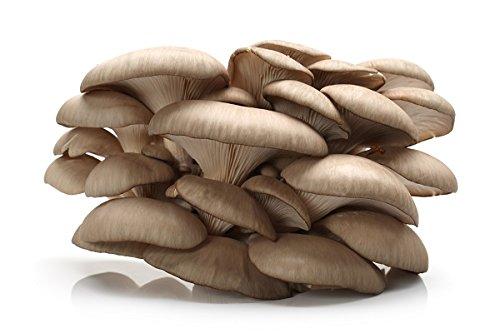 Este hongo pertenece a las especies de hongos ostra más colectadas en nuestro país. Sus gorras crecen de 5 a 25 cm de ancho. Las muestras más jóvenes adoptan una forma de media luna que a veces gira en forma de abanico o en forma de embudo. To...