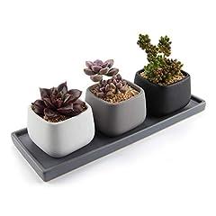 Idea Regalo - T4U 7CM Ceramica Moderno Mini Piazza Succulento Vaso/Cactus Vasi di Fiori Contenitore Porta Porcellana Piante con Vassoio Rettangolare - Colore Pieno Confezione da 3