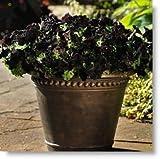200 graines / lot rock Cress, GRAINES Aubrieta Cascade Purple Flower, couvre-sol vivace Superbe maison jardin