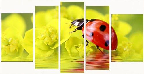 Startonight Cuadro sobre Vidrio Mariquita, Impresion en Calidad Fotografica Pintura Listo Para Colgar Diseño Moderno Decoración Formato Grande 90 x 180 CM
