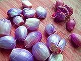 14: Happy Farm Mini Cipolla Dolce Seme Verdure biologiche Seed pianta Interessante Giardino Domestico di DIY Bonsai Vasi di Fiori Fioriere 100 Pz 14