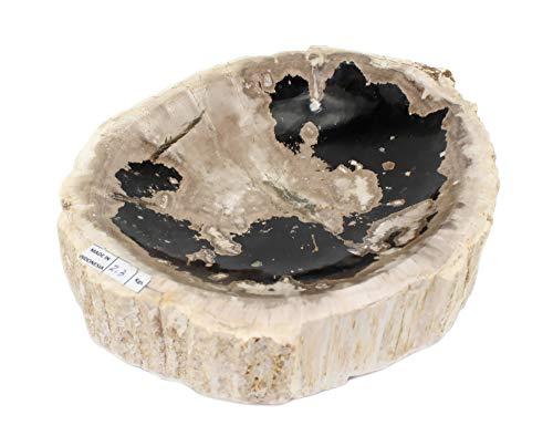 Dekoschale Versteinertes Holz (Fossiles Holz) Holzschale, Steinholz Fossilien