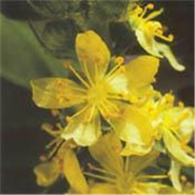 Bachblüten Original Agrimony 20 ml (20 ML)