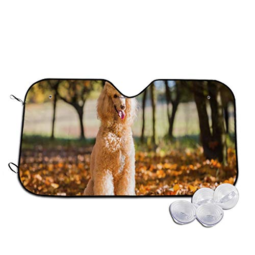 Rterss Portrait Of A Royal Pudel In An Autumn Fores Windschutzscheibe, Sonnenschutz, Frontscheibe, Glas, verhindert das Aufwärmen des Autos im Inneren Gr. 85, weiß -
