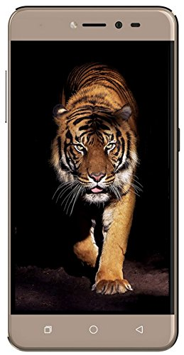 Coolpad Note 5 Lite (Royal Gold, 3GB RAM + 16 GB)
