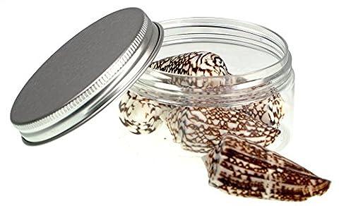 Muscheln ausgewählte Qualität - Western Imperial Membran Shell: Conus Pflanze) - Muscheln für Seemuscheln Vasen, Boxen, Bilderrahmen, Schmuckherstellung & Mini Garten Miniatur