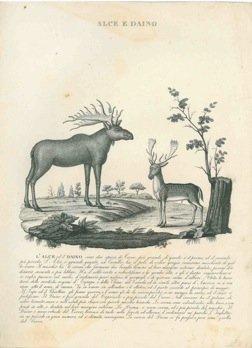 alce-e-daino-macacco-ouanderou-giraffa-babirussa-e-porcellino-dindia-leone-pigro-di-bengala-tapiro-i