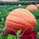 Souked Verduras gigante de alta calidad de calabaza orgánica Jardín Dulce Verdes crecen enormes 5 Semillas