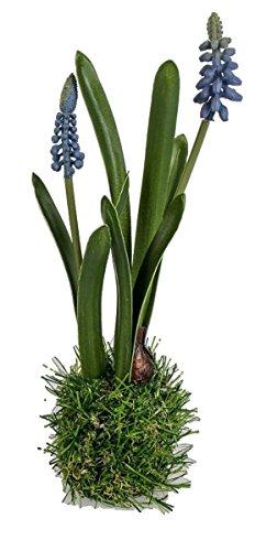 Dekohyazinthe Dekoblume Kunstblume blau auf Grassockel, 26 cm