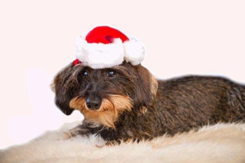 Mini-Nikolausmütze für Tiere, Hunde, Katzen, Weihnachtsmütze, Dekorationsmütze, vielseitig, rot-weiß (Weiße Nikolausmütze)