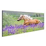 islandburner Bild Bilder auf Leinwand Palomino Pferd mit Langen blonden Mann auf Blumenfeld Wandbild, Poster, Leinwandbild Gay